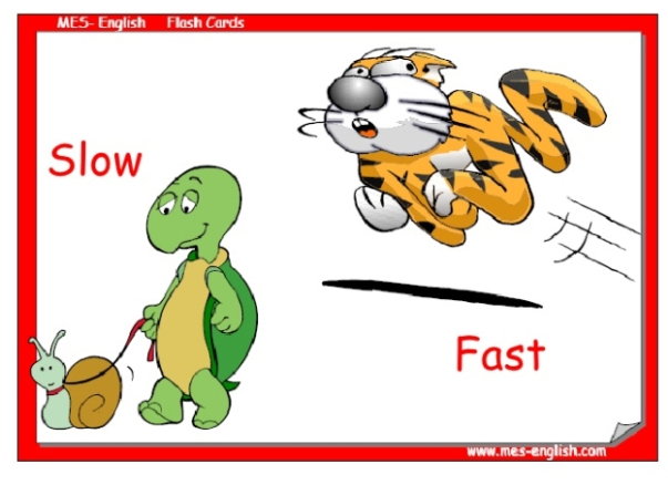 slow and fast copia